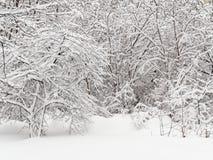 Tungt sn?fall i skogen royaltyfria foton