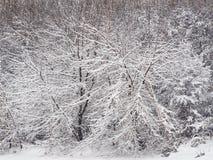 Tungt sn?fall i skogen royaltyfri bild