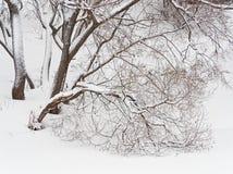Tungt sn?fall i skogen royaltyfri fotografi