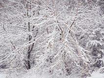 Tungt sn?fall i skogen royaltyfria bilder