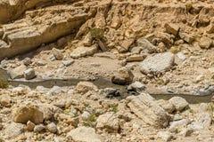 Tunisia embankment Royalty Free Stock Photo