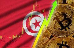 Tunisia flag and cryptocurrency growing trend with many golden bitcoins. Tunisia flag  and cryptocurrency growing trend with many golden bitcoins. Concept of royalty free illustration