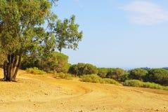 Tunisia mountains. Landscape of arid Tunisian mountains with trees Stock Image