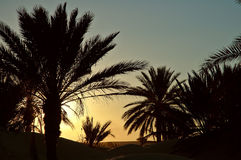 Tunisia sunset. Sunset in Oasis Royalty Free Stock Images