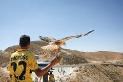 Tunisian man holding hawk Stock Images