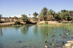 Tunisian oasis Stock Photography
