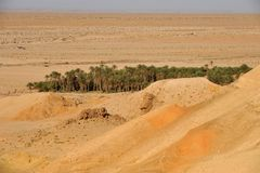 Tunisian oasis. Oasis Tozeur in South Tunisia, Africa Stock Image