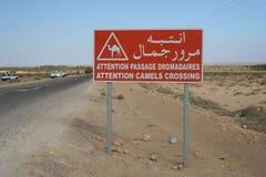 Tunisien Hott el Gharsa Arkivbilder