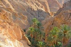 Tunisien oas Chebika Royaltyfria Bilder