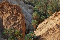Tunisien oas Chebika royaltyfri fotografi