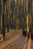 Tunks das árvores i na madeira do outono imagens de stock royalty free