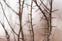 Tunna filialer av ett ungt träd på kanten av skogen gör sammandrag tätt upp Royaltyfri Bild