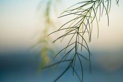 Tunna grässtrån Royaltyfria Bilder