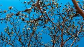 Tunna träd med filialer på bakgrund för blå himmel Royaltyfria Foton
