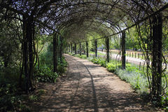 Tunnel. A pleasant trees tunnel in a park Royalty Free Stock Photo