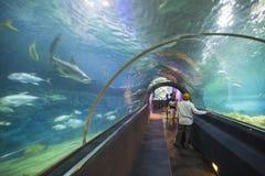 Tunnel acquatico nell'acquario del parque di Loro Immagini Stock Libere da Diritti