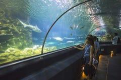 Tunnel acquatico nell'acquario del parque di Loro Fotografia Stock
