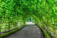 Tunnel agricolo per l'agricoltura di verdure fotografia stock