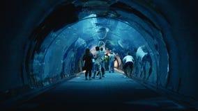 The tunnel in the aquarium in a Dubai Mall. UAE, DUBAI - 26 APRIL 2016: The tunnel in the aquarium in a Dubai Mall stock video