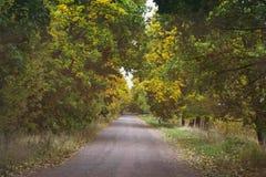 Tunnel av att gulna träd över vägen i höst Arkivbild