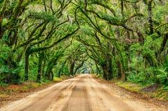 Tunnel av ekar, botanikfjärd, South Carolina Arkivfoto