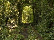 Tunnel av förälskelse Royaltyfri Foto