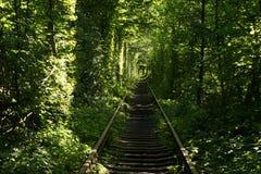 Tunnel av förälskelse i Klevan Fotografering för Bildbyråer