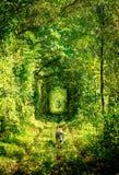 Tunnel av förälskelsejärnvägen Royaltyfria Foton