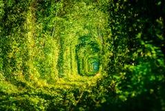 Tunnel av förälskelsejärnvägen Royaltyfri Foto