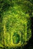 Tunnel av förälskelsejärnvägen Royaltyfria Bilder