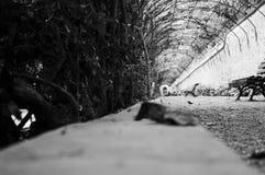 Tunnel av rosor i trädgårdarna av Monforte Arkivbild