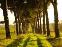 Tunnel av träd Arkivfoto