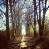 Tunnel av trädet Fotografering för Bildbyråer