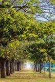 Tunnel av trees Royaltyfri Foto