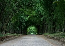 Tunnel bamboo tree on road Royalty Free Stock Image