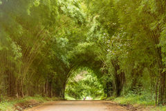 Tunnel bamboo trees and walkway. Stock Photography