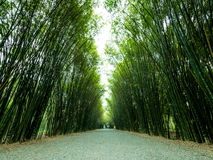 Tunnel bamboo trees and walkway. Royalty Free Stock Image