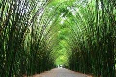 Tunnel bamboo trees and walkway Stock Image