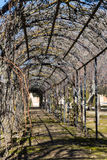 Tunnel with branching. View of a tunnel produced by a metal structure, on which are entangled vines stock photography