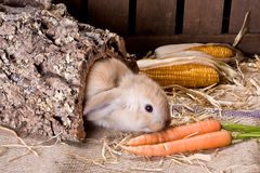 Tunnel bunny Royalty Free Stock Images