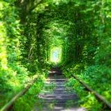 Tunnel célèbre de ` de ` d'amour en Ukraine Photo stock