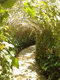 tunnel of plant stock photography