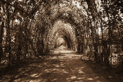 Tunnel d'arbre Images stock