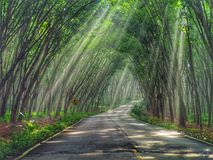 Tunnel d'arbre photo stock