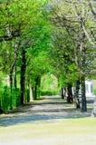 Tunnel d'arbre dans gardent Image libre de droits