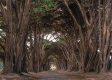 Tunnel d'arbre de Cypress, point Reyes, CA, Etats-Unis photo libre de droits