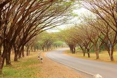 Tunnel d'arbre de pluie Photo libre de droits
