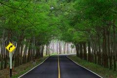 Tunnel d'arbre en caoutchouc sur la route Image stock