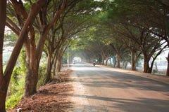 Tunnel d'arbre en Thaïlande photographie stock libre de droits