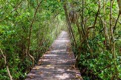 Tunnel d'arbre, pont en bois dans la forêt de palétuvier Image stock